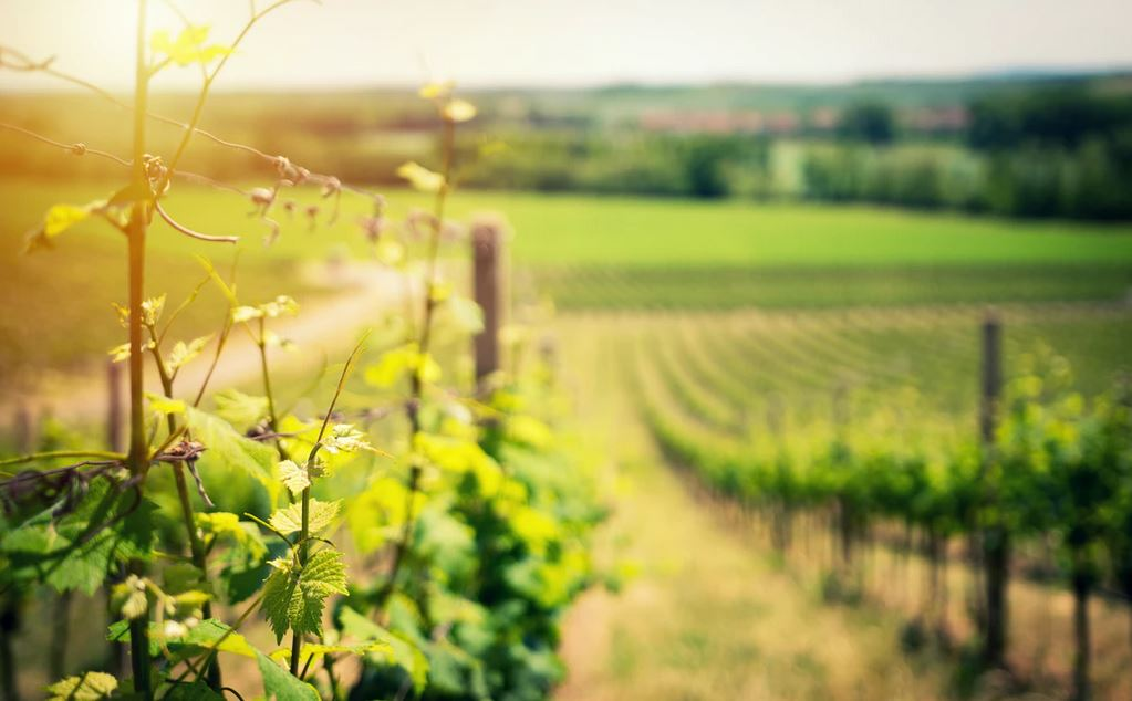 Condrieu vin : prix