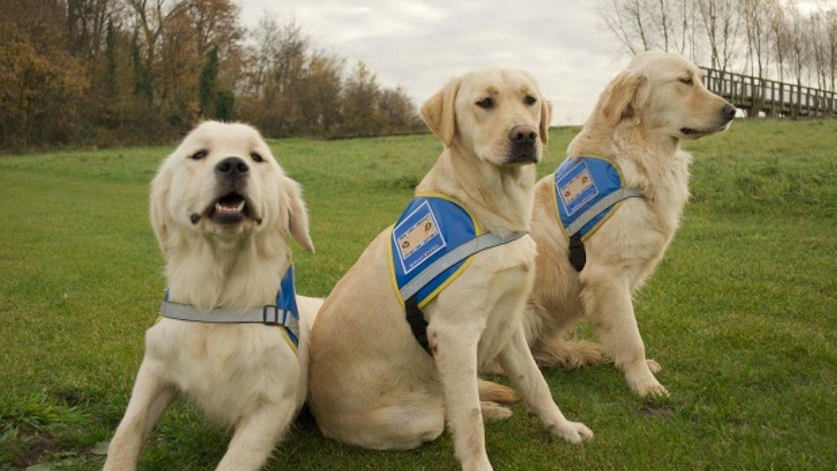 Devenir famille d'accueil pour chien guide d'aveugles